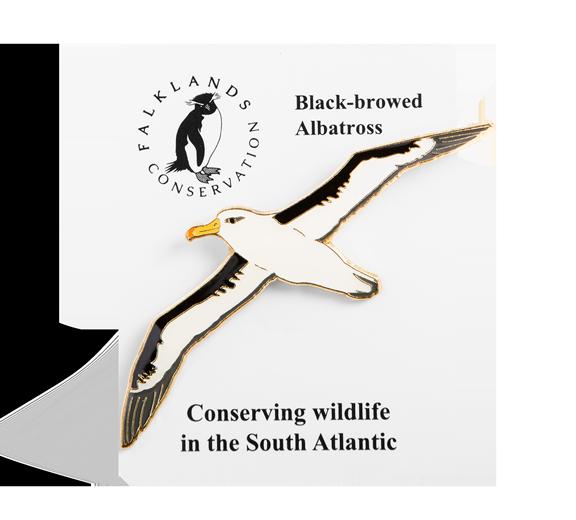 black-browed-albatross-pin