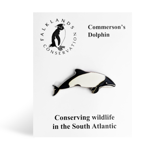 commersons-dolphin-pin-badge