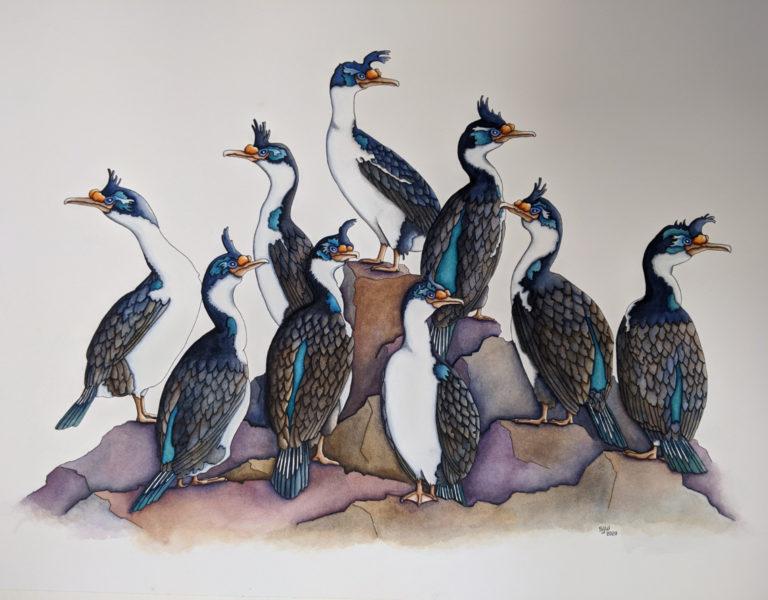 artwork of king cormorants by stuart walker